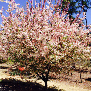 Seasonal Allergies:  The Price Spring Charges Us for Its Blossoming Arrival