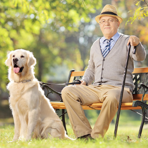 Service Dogs as Companions and Assistants for Seniors with Dementia